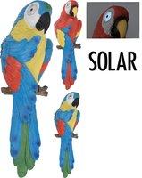 Papegaai met solarogen