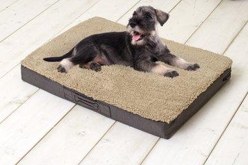 Sun Garden Buddy Orthopedisch Hondenkussen 72x50x8cm Beige
